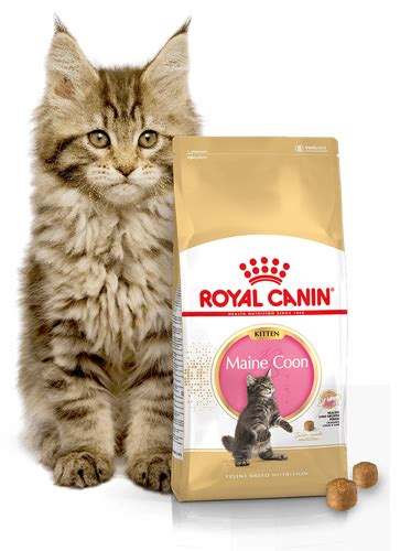 Royal Canin 400 Gr Kitten Maine Coon 36 1 royal canin maine coon kitten 36 400g internetowy sklep