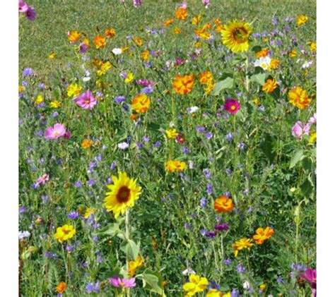 Perennial Wildflower Seed Mats by Simple Sowing Bee Friendly Wildflower Mixed Seed Mats