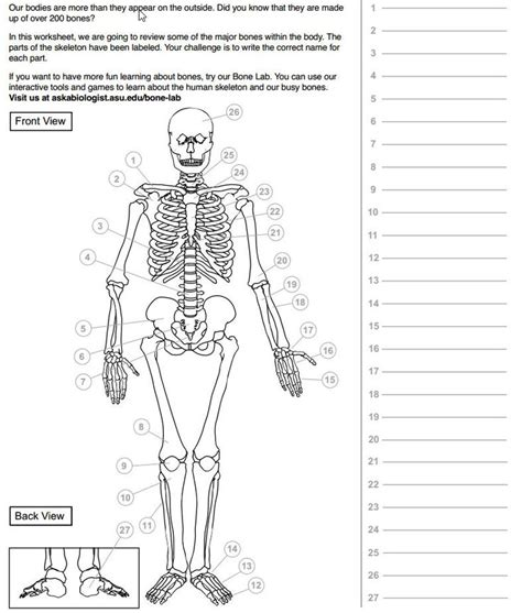 ask a biologist coloring page human heart 31 best skeleton images on pinterest bones the human