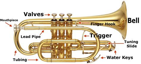 trumpet diagram musical terms glossary brass normans