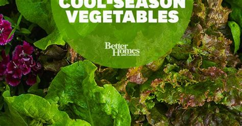 Grow Longer The Best Cold Tolerant Veggies Gardening Cold Weather Vegetable Gardening