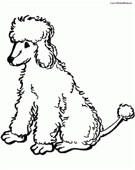 free poodle coloring pages coloring home