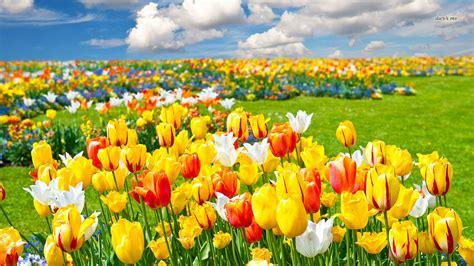 wallpaper bunga warna warni bergerak gambar gambar bunga lengkap