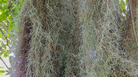 plants sun city center photos
