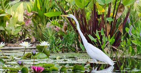 naples botanical garden coupon naples botanical gardens coupons naples botanical garden