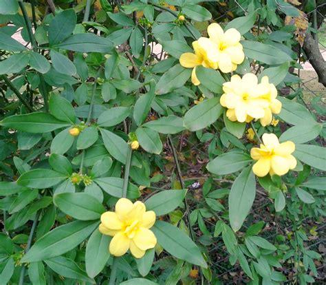 imagenes flores invierno flores para tener colorido el jard 237 n en oto 241 o e invierno