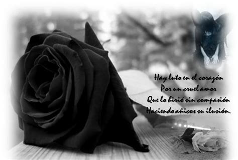 imagenes de rosas negras para whatsapp im 225 genes para whatsapp de luto