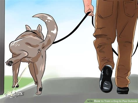 how to break a dog from peeing in the house how to train a dog to pee outside 13 steps with pictures