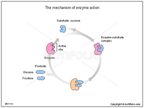 the mechanism of enzyme ppt powerpoint drawing