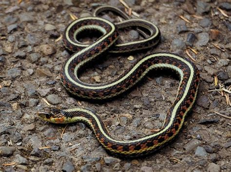 snake   garden growing  life