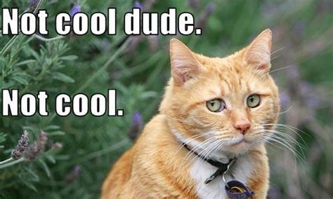 Cool Cat Meme - not cool dude not cool cats know your meme