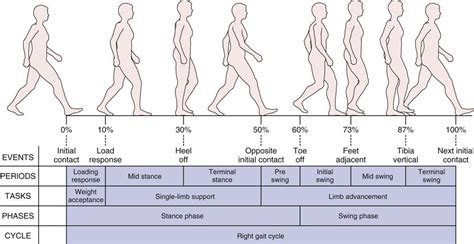 swing phase of walking assessment of gait musculoskeletal key