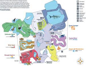 aquarium map aquarium atlanta the swimming cuttlefish