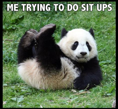 these panda memes showing daily struggles of life are so