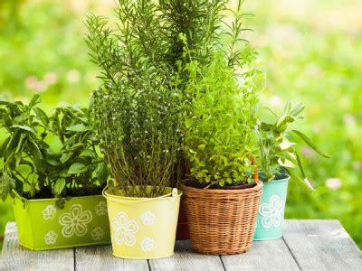 Duftende Garten Pflanzen by Duftgarten Anlegen
