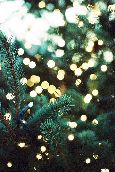 Pine Trees Lights Winter Feels Pinterest Pine Tree With Lights
