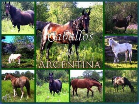 caballos de argentina v m
