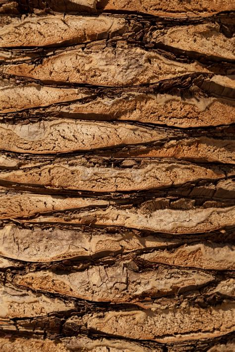 images tree nature rock abstract plant wood texture floor trunk bark formation