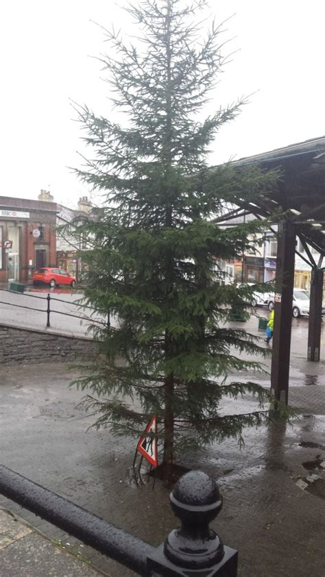 is this the worst christmas tree in britain metro news