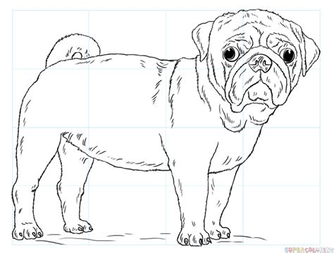 step by step how to draw a pug how to draw a pug step by step drawing tutorials