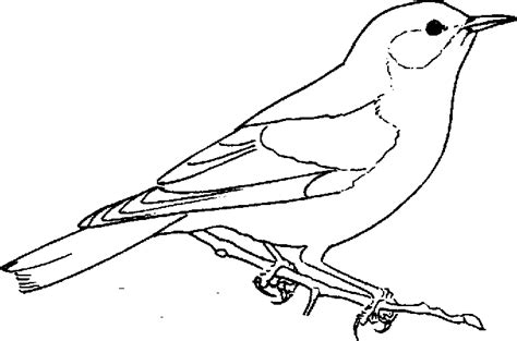 bluebird coloring page animals town animal color
