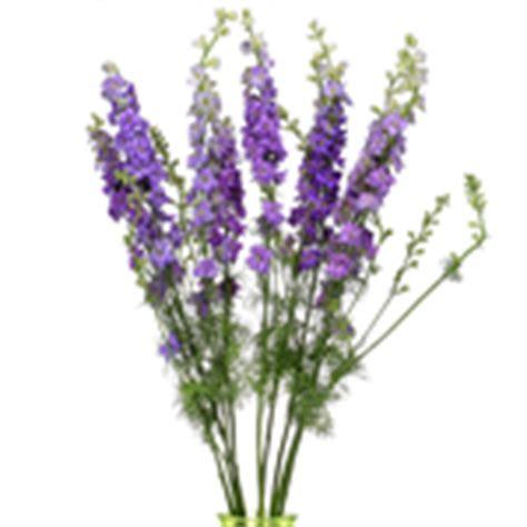 new at fiftyflowers fresh lavender larkspur lavender flower