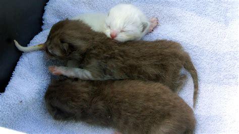 katzen in der wohnung halten rettungsaktion tiersch 252 tzer holen 44 katzen aus wohnung