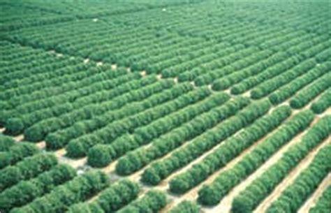 Cropping Pattern Adalah   budidaya pertanian cropping pattern