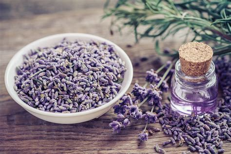 lavender oil bed bugs does lysol kill bed bugs all you need to know before