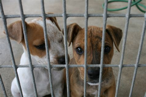 8 Reasons I Animals by Animal Cruelty Is Part Of The Fabric Of The Former Soviet