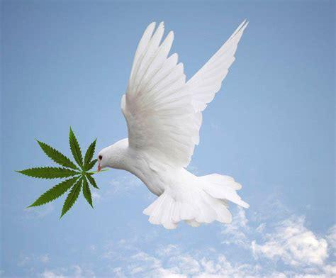 imagenes de luto con palomas en argentina distribu 237 an marihuana con palomas mensajeras