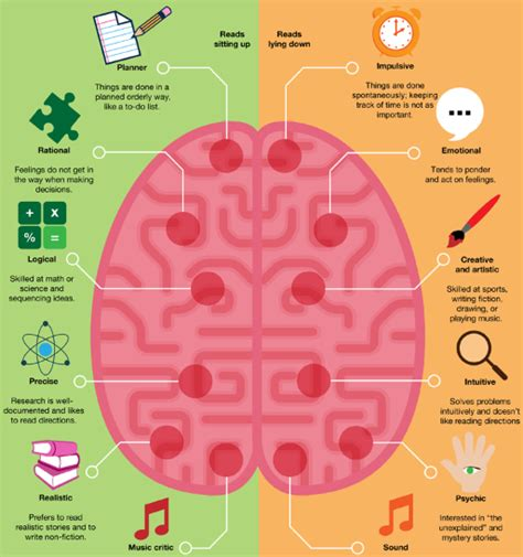 st on left or right left vs right brain the big picture