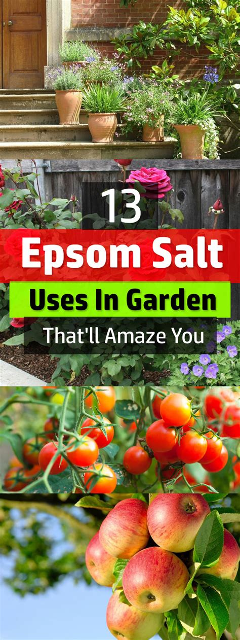 13 epsom salt uses in garden that ll amaze you balcony