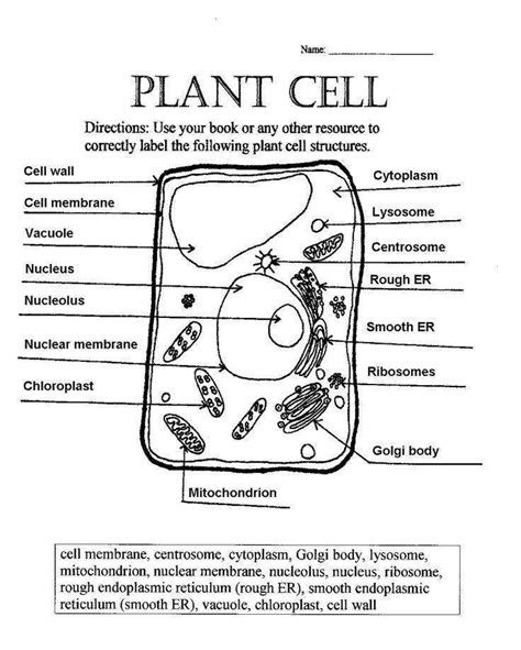 plant cell diagram worksheet homeschooldressage