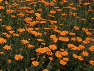 Best Perennial Flowers Jim S Favorite Flower Garden Seeds