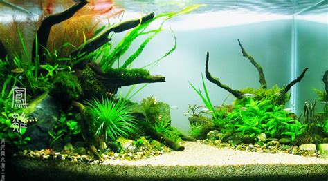 Aquascaping Competition Freshwater Aquariums Get To Know The Different Types Of