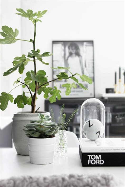 Living Room With Green Plants How To Accessorise And Decorate Your Home Destination Living