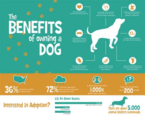 benefits of dogs the benefits of owning a infographic poster on behance