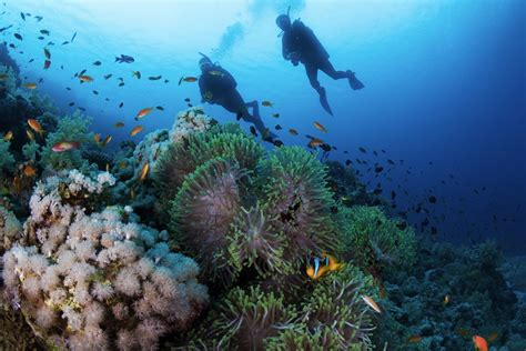 top  mediterranean diving sites