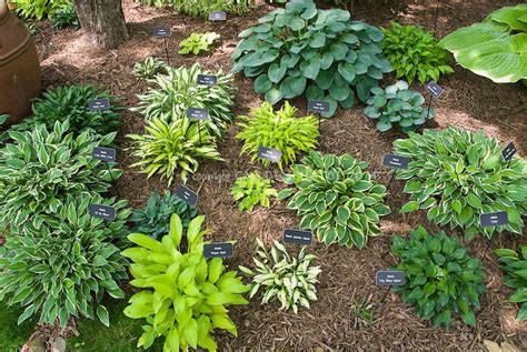 garden plants names and pictures 7 best images about urban gardening inspiration on