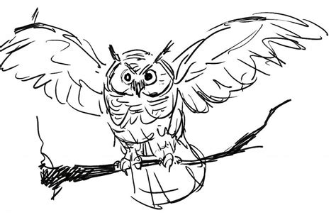 screech owl coloring page free printable owl coloring pages for kids