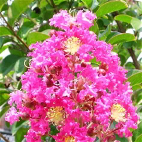 wallpaper bunga kecil 99 jenis tanaman obat keluarga toga serta kandungan dan