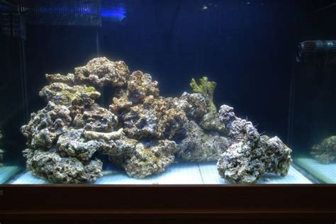 aquascape reef tank reef tank aquascaping aquascaping first attempt
