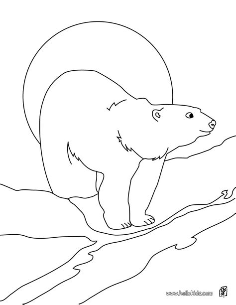 printable pictures polar bears arctic animals coloring pages print outs coloring pages