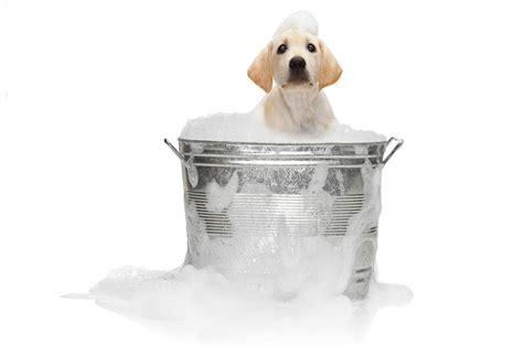 dog bathtub dog grooming gardiner