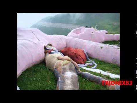 imagenes cosas increibles cosas incre 237 bles del mundo imagenes conejo rosa gigante