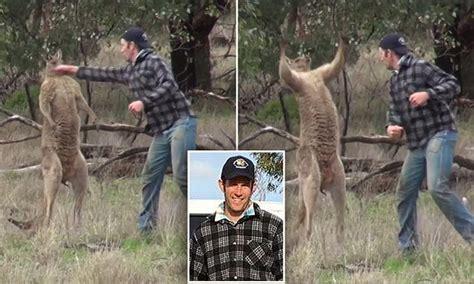 kangaroo with in headlock dr eldridge explains why kangaroo put in headlock before owner punched it