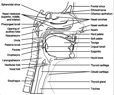 head anatomy and physiology coloring page wecoloringpage