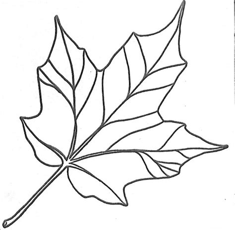 free maple leaves coloring pages
