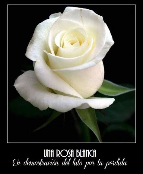 hermosas imagenes de pesame las mejores im 225 genes de rosas blancas para luto im 193 genes